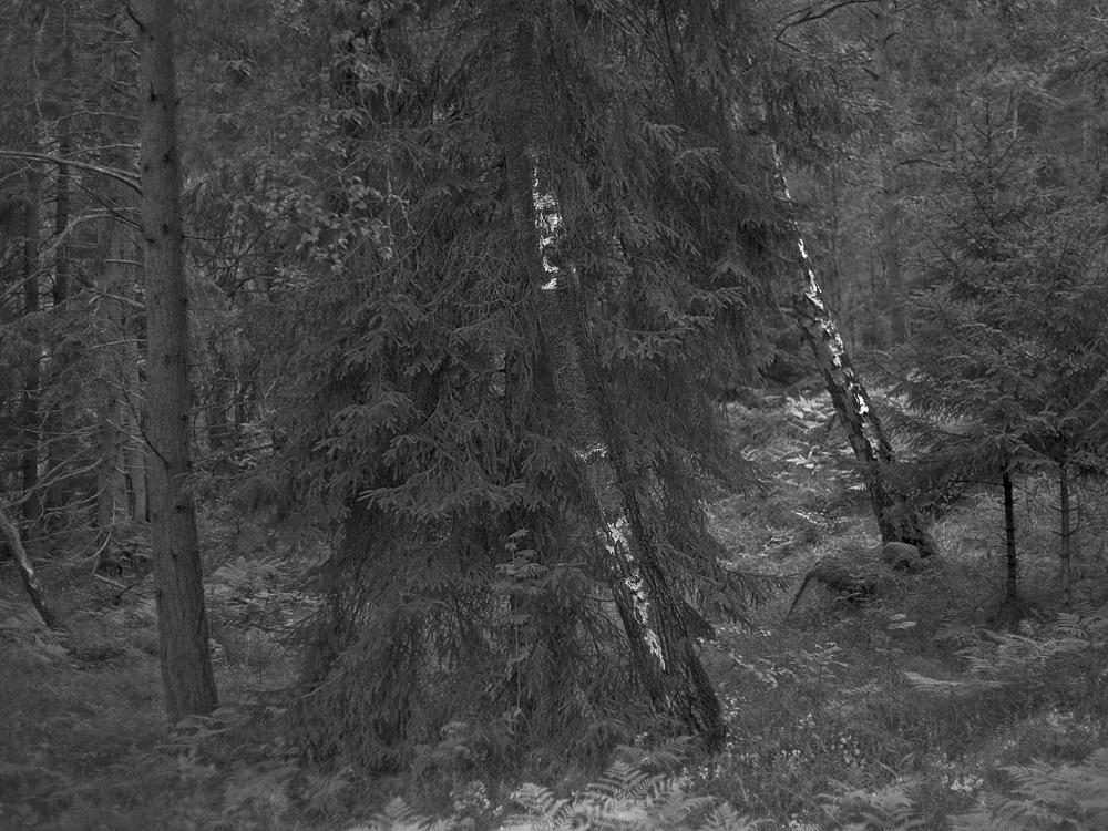2015_Cruel Nature (4)_Kristoffer Axen.jpg