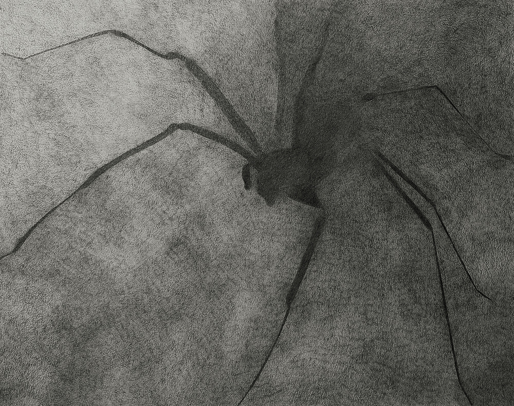 2012, Brown Recluse 20x25cm, Pencil on Paper