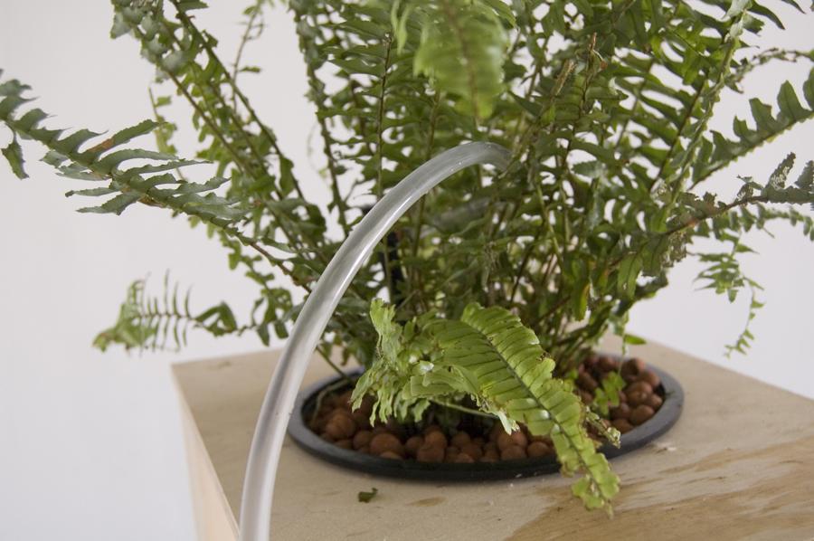 metronome-plant.jpg