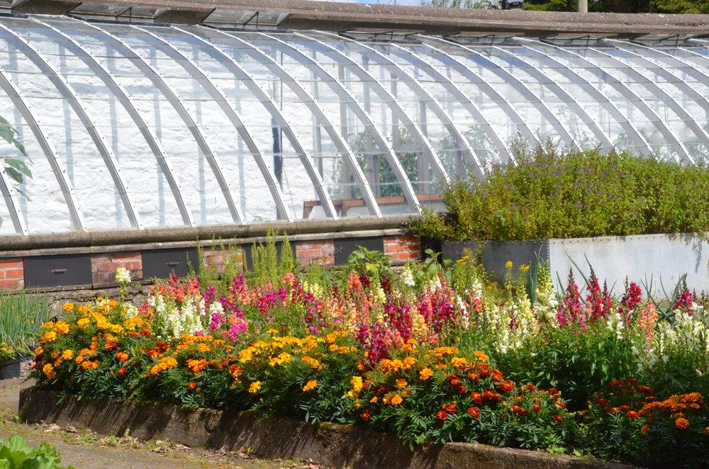 Kitchen garden at Tapeley Park