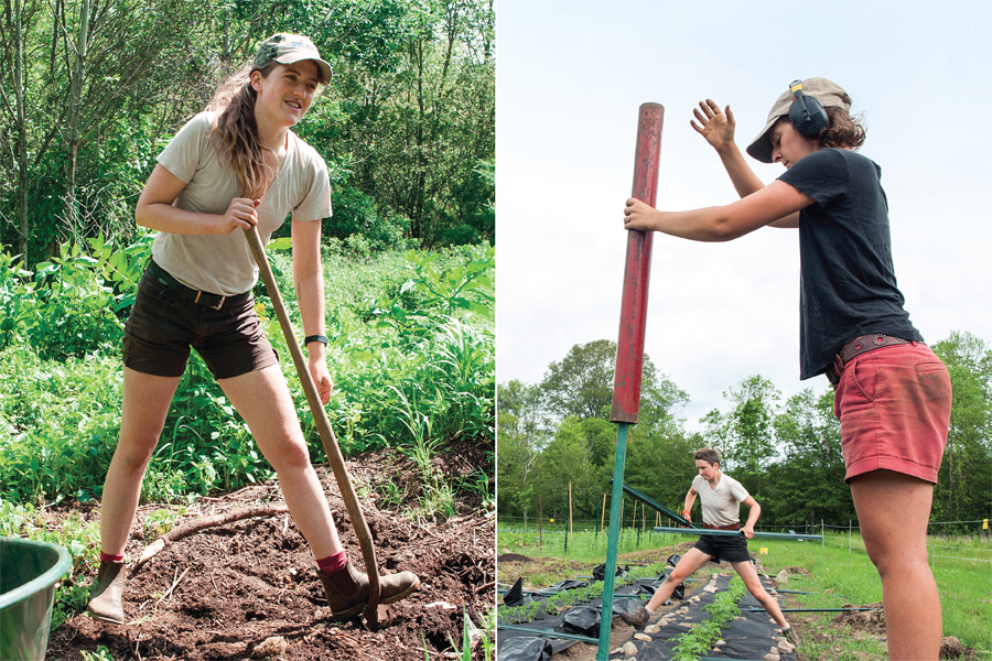 SOIL SISTERS ARE DIGGING IN AT SIDEWALK ENDS FARM  -   Honorable Mention: Best Business Article of the Year, 2015 from the RI Press Assoc.