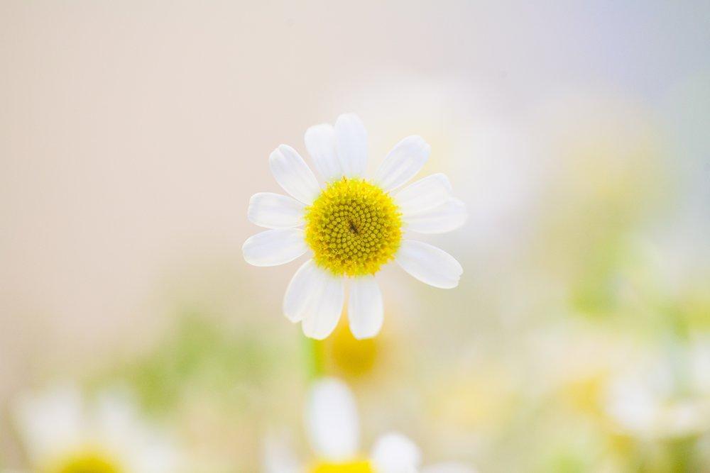 inspirational, flowers, mofoluwaso ilevbare