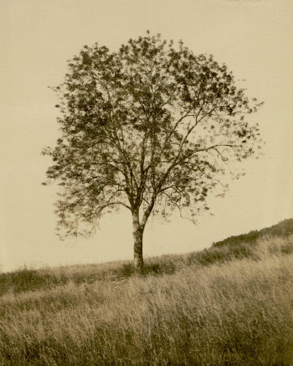 Polaroid-04.jpg
