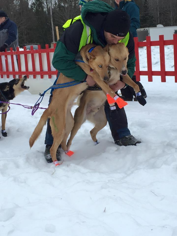 sled dog 3.jpg