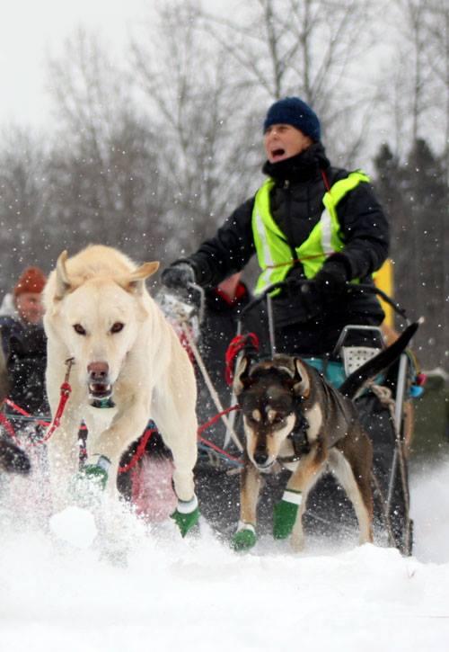 sled dog 4.jpg