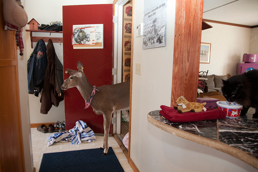 Dillie the Deer. Canal Fulton, OH