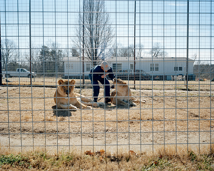 Front Yard Lions. Rockwell, NC