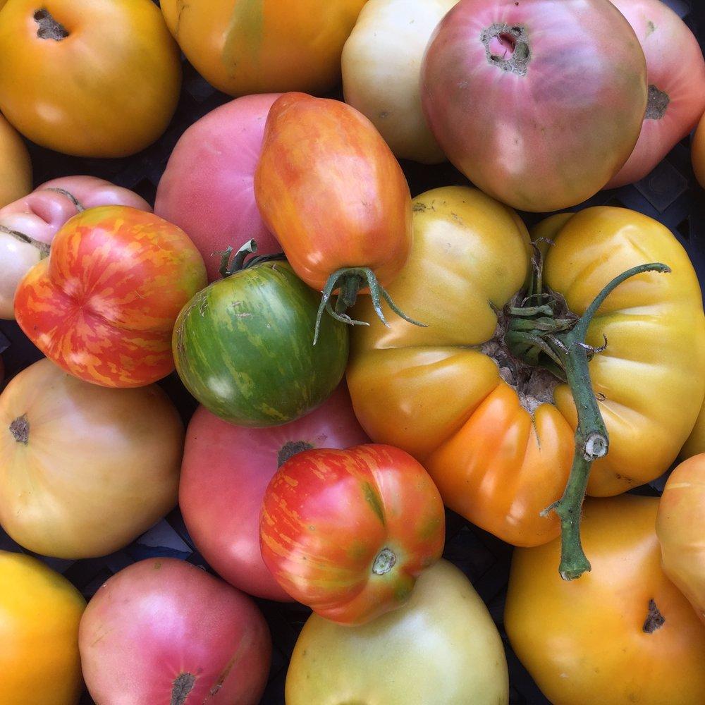 Food Field -