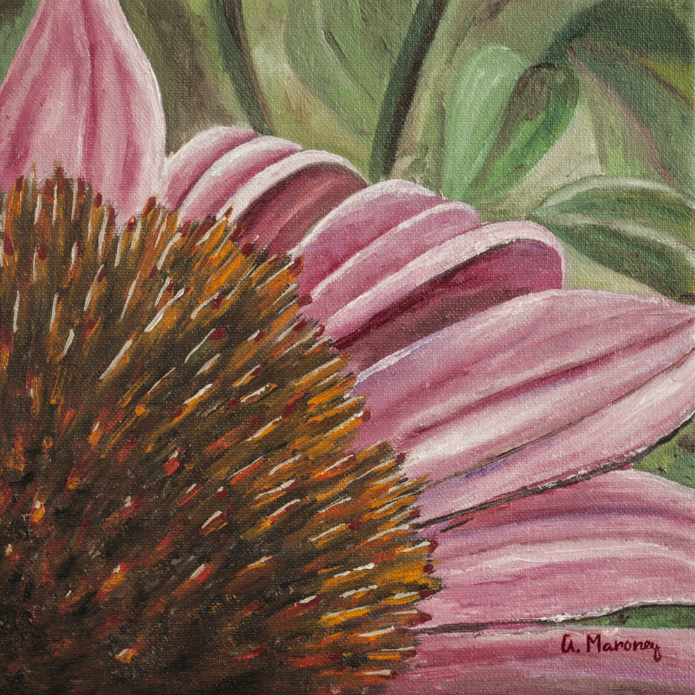 Purple Coneflower.jpg