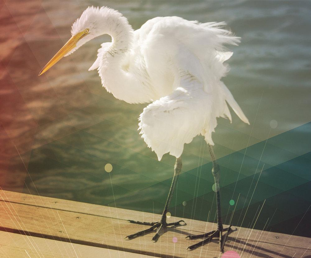 Radically-Distinct-Ruffled-Feathers.jpg