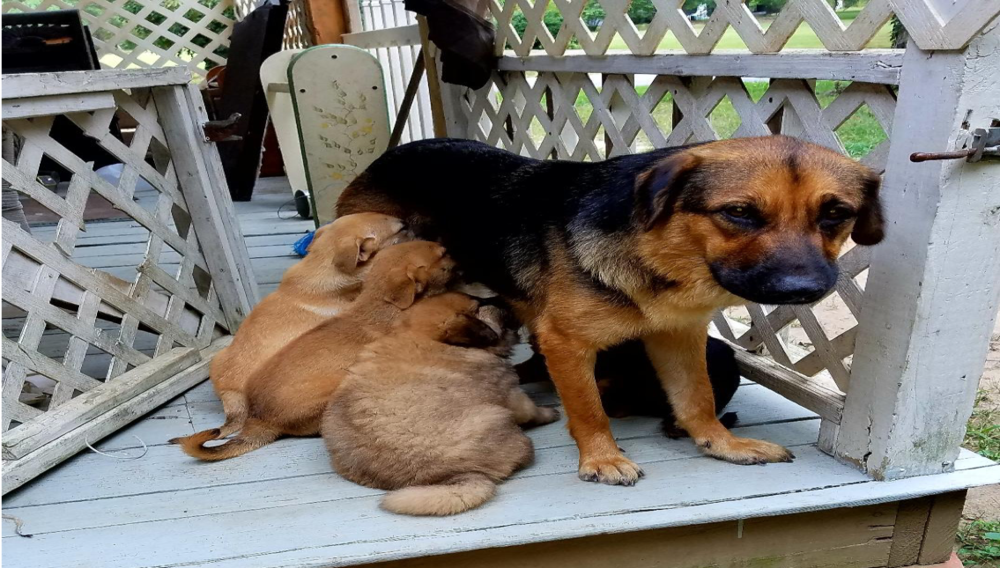 Big Girl (mom) fixed, vaccinated and all 7 puppies were fixed, dewormed, vaccinated and adopted! Location: Fayetteville, GA