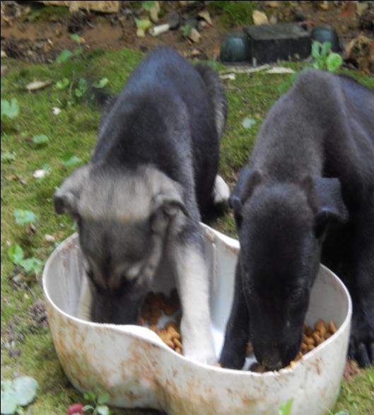 Sophie & Dahlia – rescued from backyard breeder