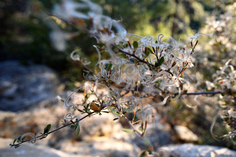 Feathery Flower 1.jpg