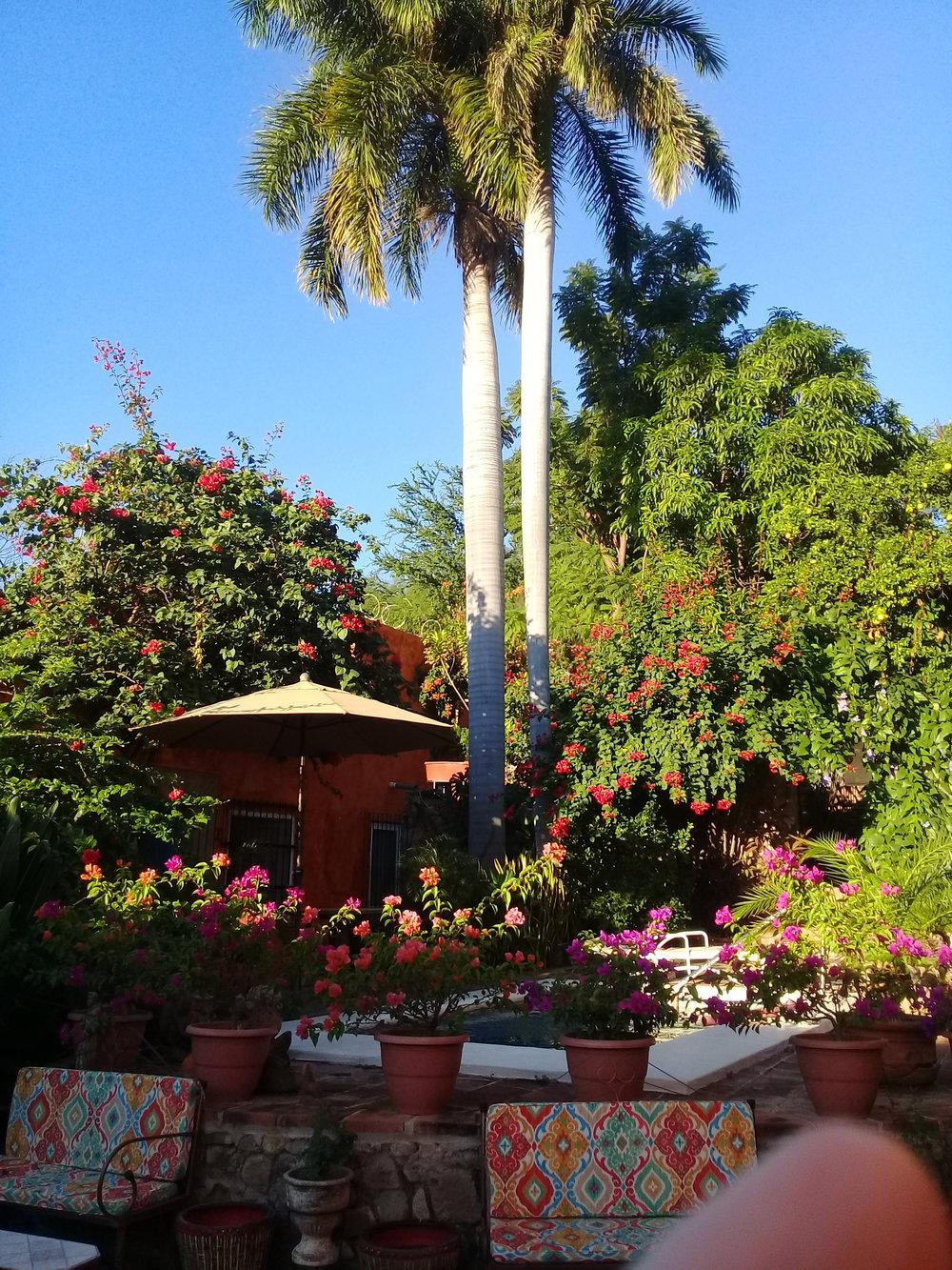 palm and pool.jpg