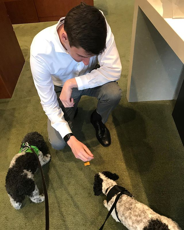 Hand fed cookies at their local @firstrepublic branch; these 🐶 have arrived! Thanks Dan!