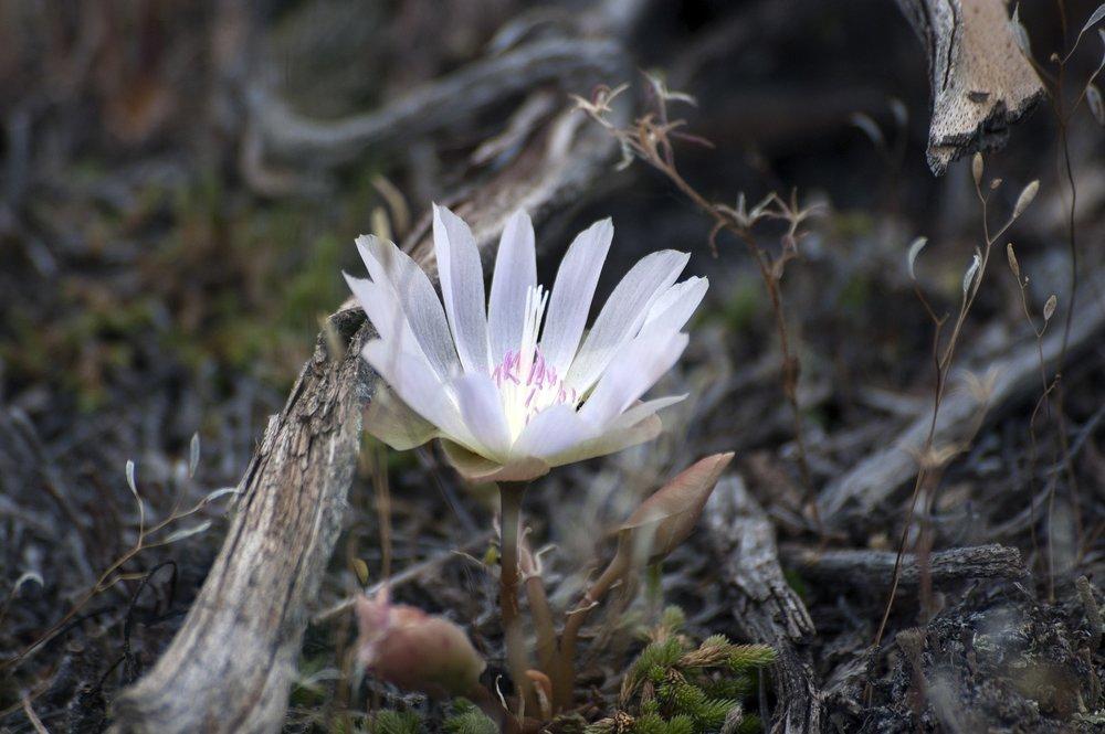 flower-2372997_1920.jpg