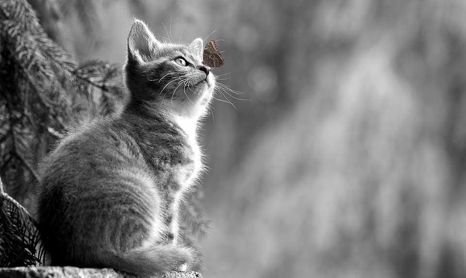 Cat_butterfly.jpg