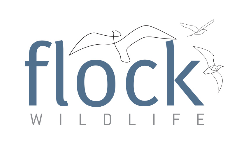 FLOCK wildlife - Bird & Wildlife Photography Tours