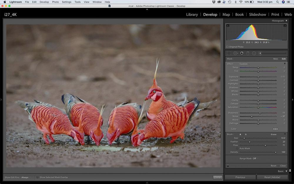 LR develop screenshot_Spinifex Adjustment Brush.jpg