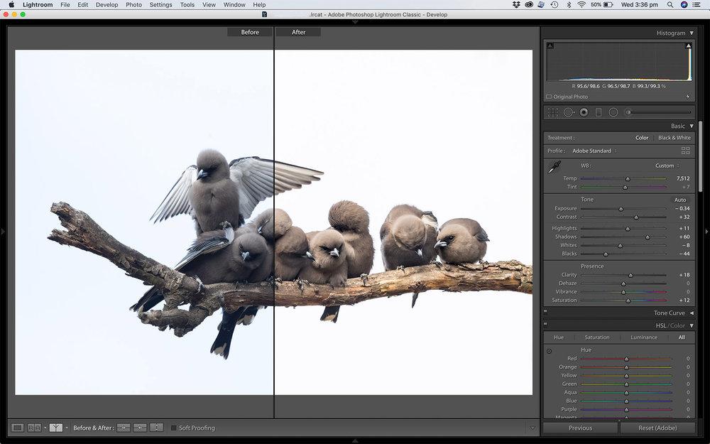 LR develop screenshot_Woodswallow Split.jpg