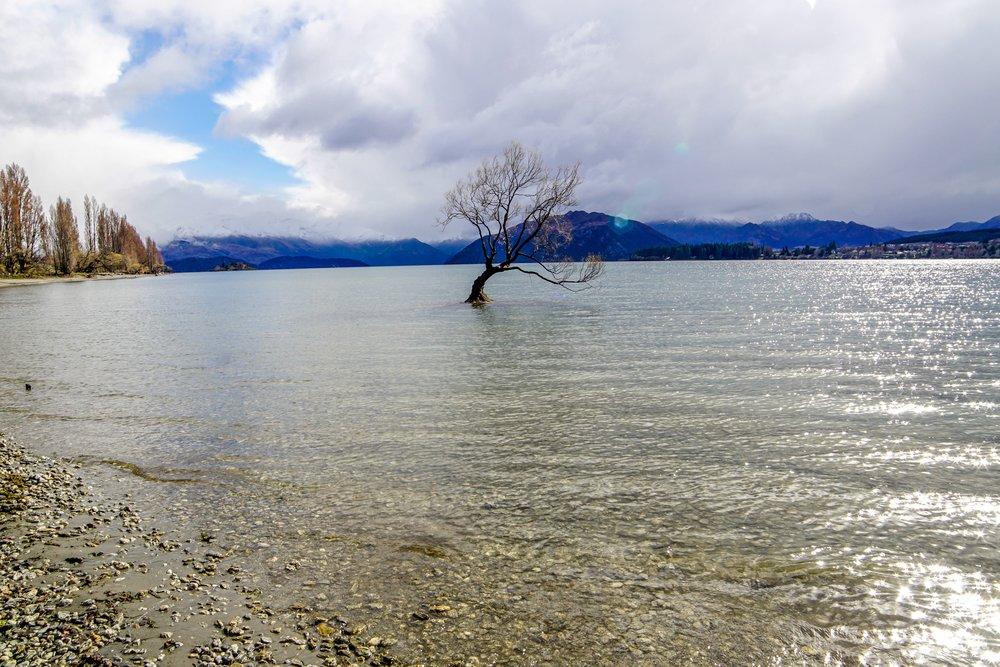 Lone tree of Lake Wanaka