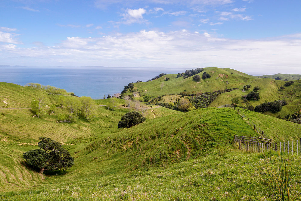 Rolling hills and ocean on the way to Coromandel Town