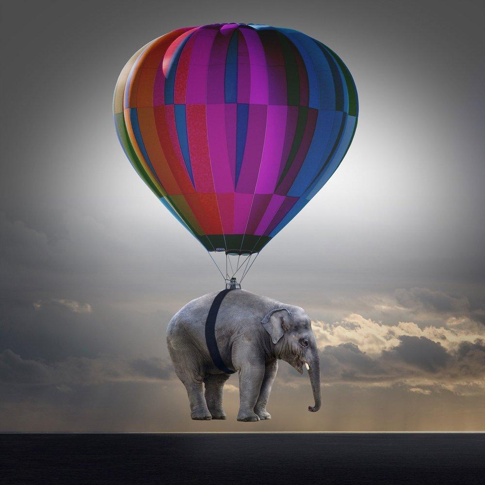 elephant-2611678_1920.jpg