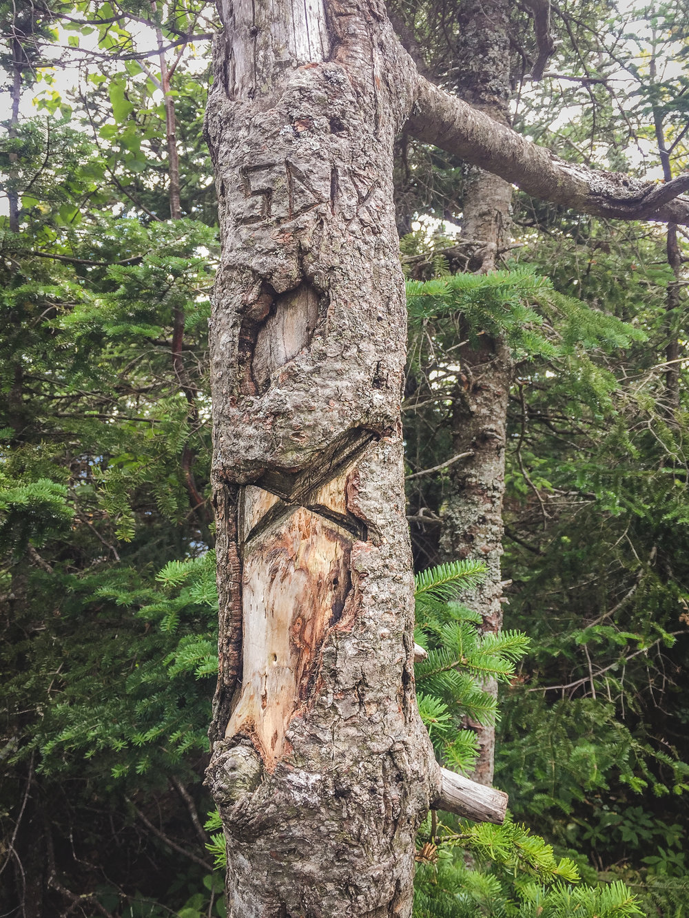 Tree carving signifying the summit of South Dix