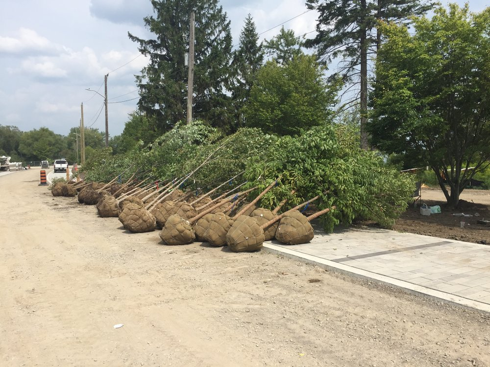 Pickering - Photo 4 - Trees being delivered to the project site.JPG