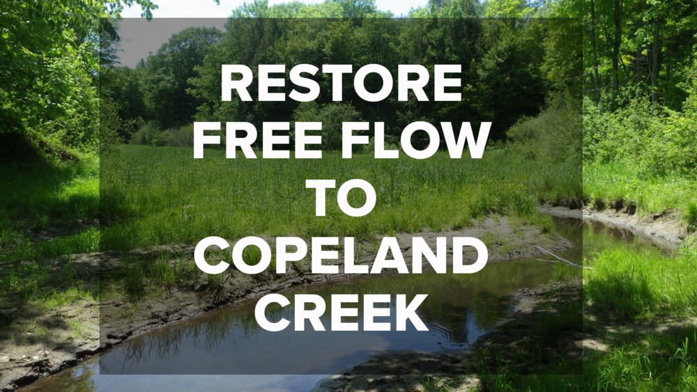 The Weston Family Swim Drink Fish Great Lakes Challenge - Restore Free Flow to Copeland Creek - Township of Tiny, Ontatrio