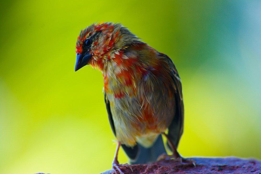 8 Seychelles birdy.jpg