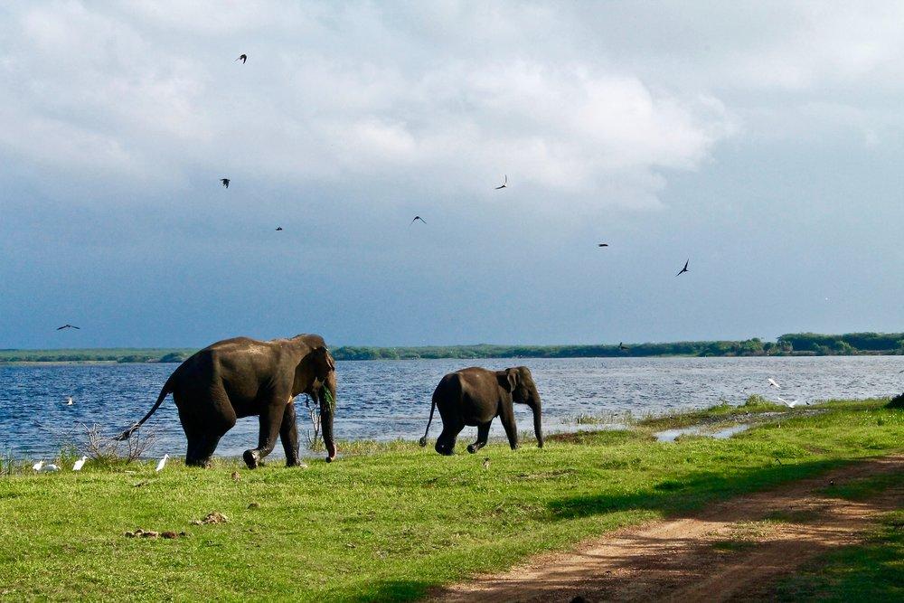 9 Sri Lanka.jpg