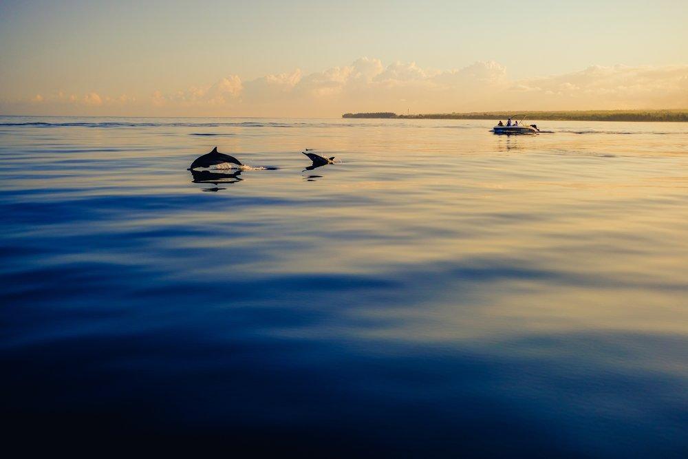 13 Mauritius dolphins.jpg
