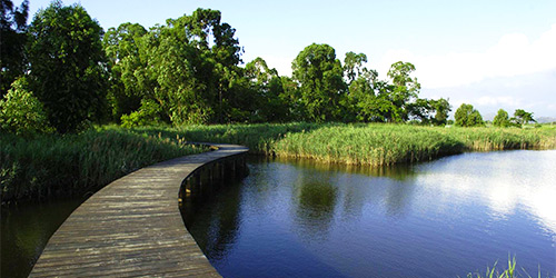 7.1 Wetland park a.jpg