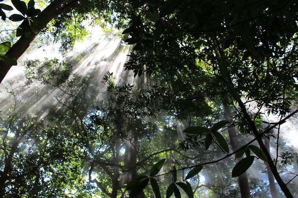 costa-rica-forest.jpg