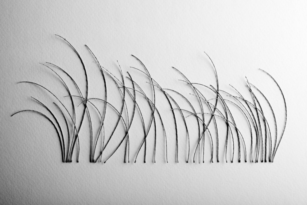 Mesquite stems straight edge, 2016