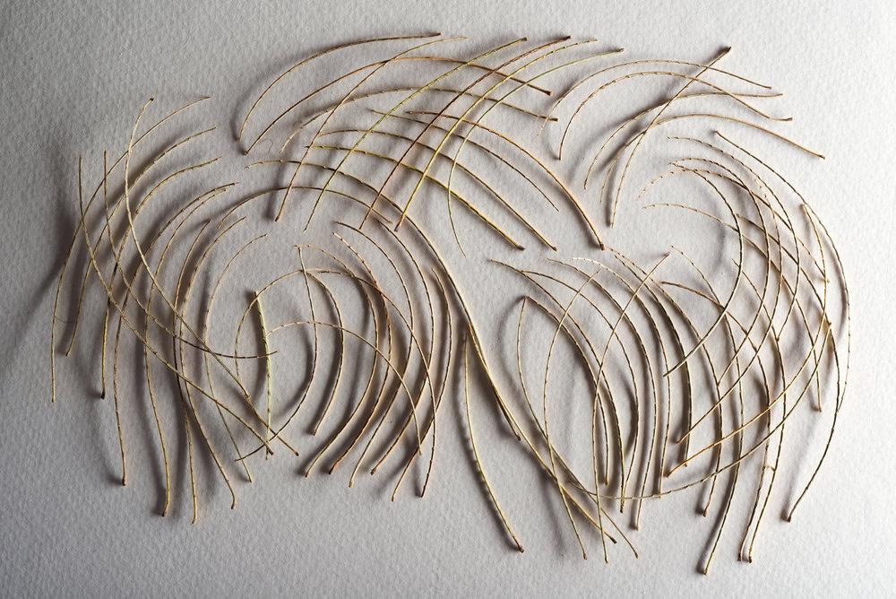 Mesquite stems, crossed, 2016