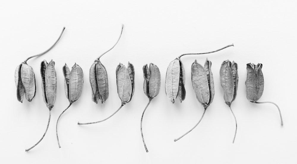 Aloe pod lineup, 2018