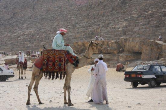 4.1224428402.camels.jpg