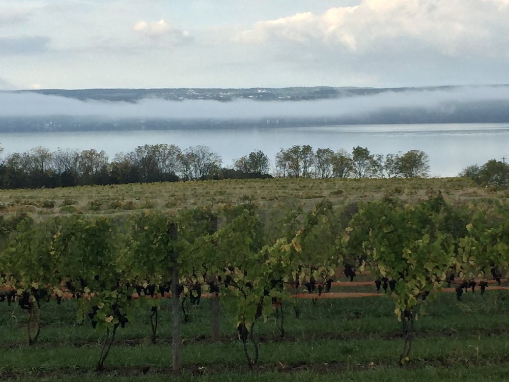 What's Behind the Stunning Rise of Finger Lakes Wines? - An inside look at the factors propelling the region to new heights. January 2018