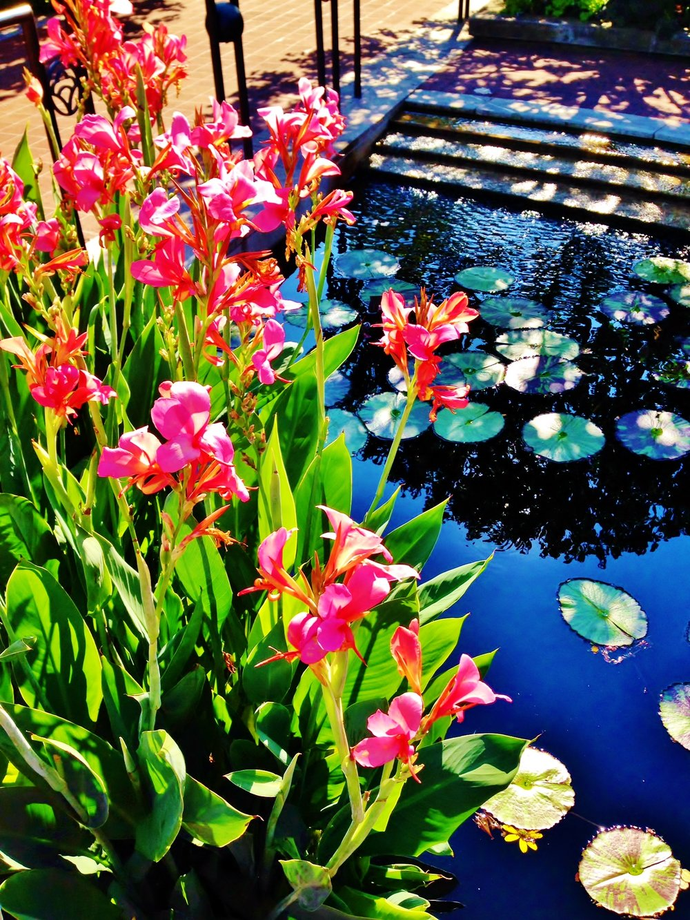 CBG Pink Flowers and Lilly Pond