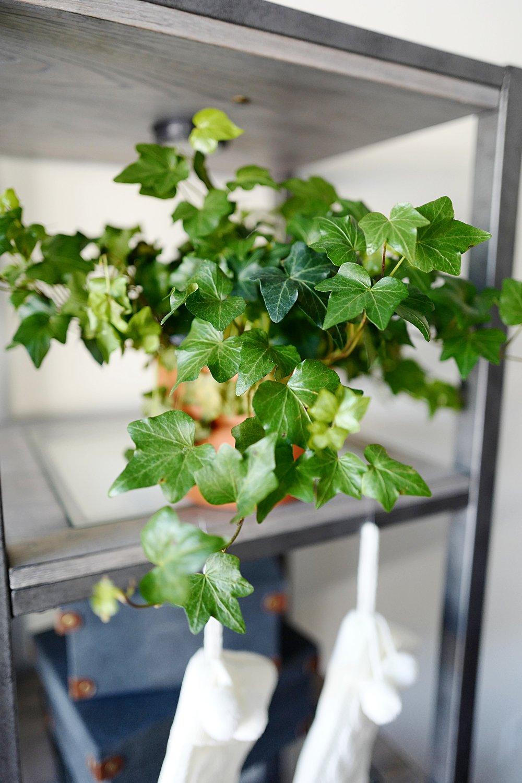Top 5 House Plants- Ivy - Home- A Briutiful Life