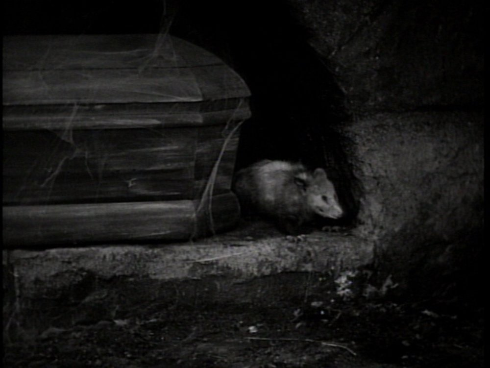 Dracula 1931 (opposom).jpg
