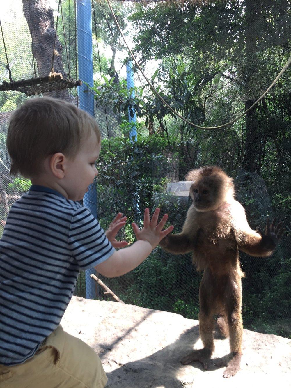 Felix Capuchin Monkeys Chapultepec.jpg