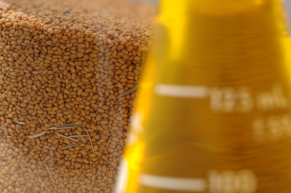 Camelina seed and the resulting oil. Credit Oregon State University/Flickr (CC BY-SA 2.0)