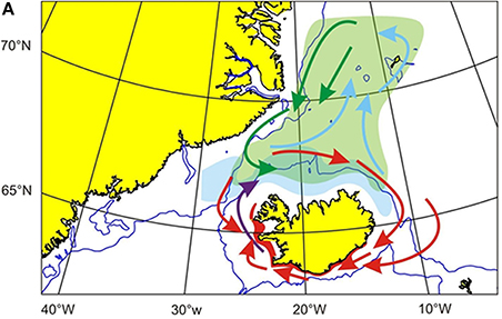 Despite their small size, capelin can travel huge distances. This map roughly shows their movements around Iceland (until the turn of the last century). Take a look at the open-access paper by Dr. Gísli A. Víkingsson & colleagues where the maps came from.