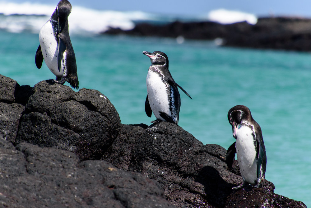 Penguin Hike  by  Peter Swaine/Flickr  ( CC BY 2.0 )