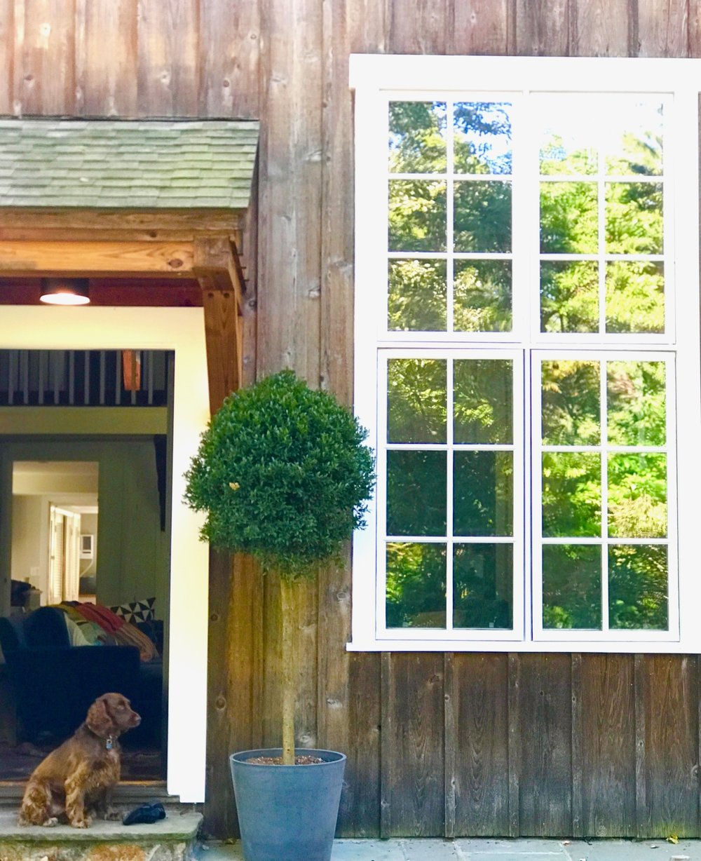 coming soon... - New age Gsa Gsa and her journalist husband moved fromThe Big Apple to their (hardly touched since 1830s) barn inWeston, CT. KR Interiors helps to bring her eclectic style into the 21st century.