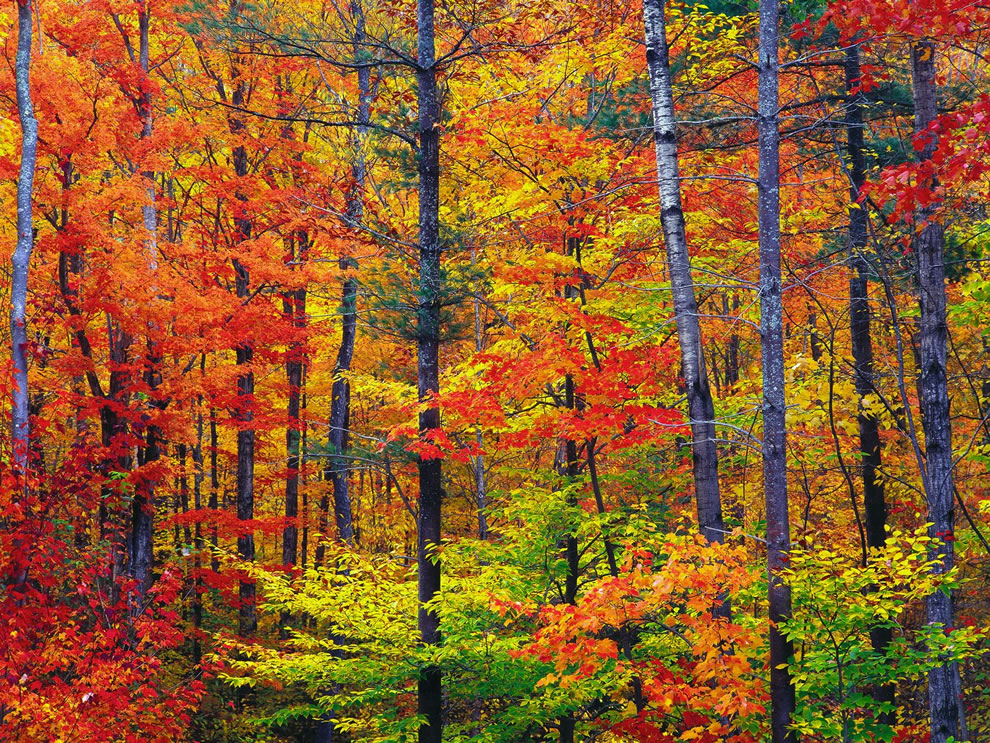 bright-fall-foliage-autumn-in-new-hampshire