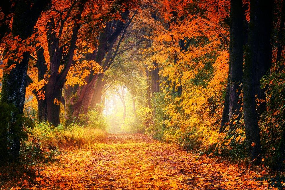 fall-forest-leaf-1114896.jpg